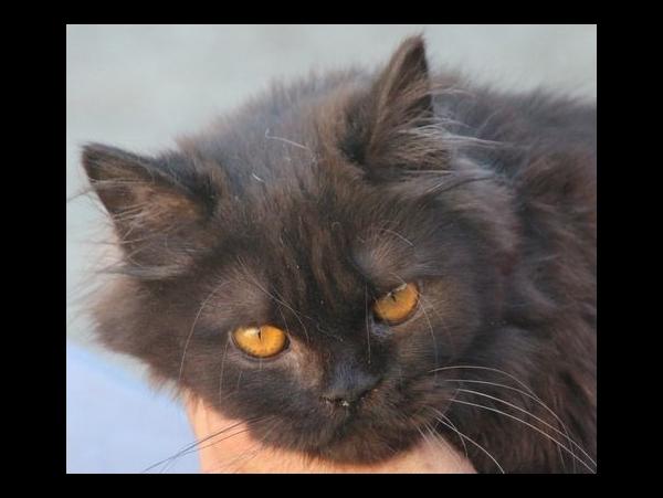 Parfait chatte noire